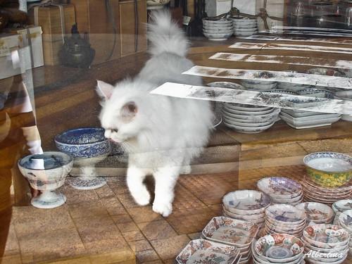 Gato en tienda de cerámicas