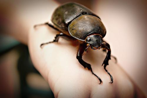 Beetle2 PSE