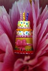 Summer cake!