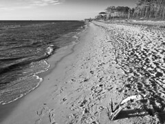 Zingst 37 (nickdemarco) Tags: