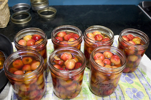 Filled Jars of Pickled Cherries