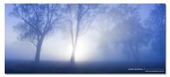 Mystic Relief. ([ Kane ]) Tags: trees light mist fog photography dawn soft heaven glow qld queensland rays kane ipswich gledhill heven kanegledhill wwwhumanhabitscomau kanegledhillphotography