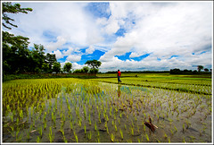 In the land of landscapes - X [..Chuadanga, Bangladesh..] (Catch the dream) Tags: blue sky plants man reflection nature field clouds rural landscape colorful rice paddy vibrant rustic wideangle environment agriculture seedlings bangladesh climate reddress cultivation chuadanga ruralbangladesh gettyimagesbangladeshq2
