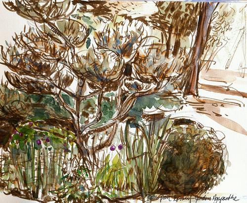 Normandy gardens: Jardin Agapanthe