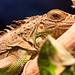 Piel de reptil  Reptile skin