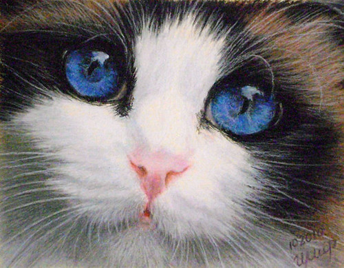 Incredible art – Oil and soft pastels