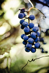 Grapes #286/365