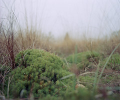 Microcosmos. (wojszyca) Tags: plant mamiya nature closeup mediumformat 50mm nationalpark kodak bokeh poland 100 6x7 bog bieszczady rz67 ektar october2010