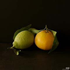 Lovers (Osvaldo_Zoom) Tags: autumn italy stilllife love fruits lemon nikon couple lovers citrus calabria autumnal mapo d80