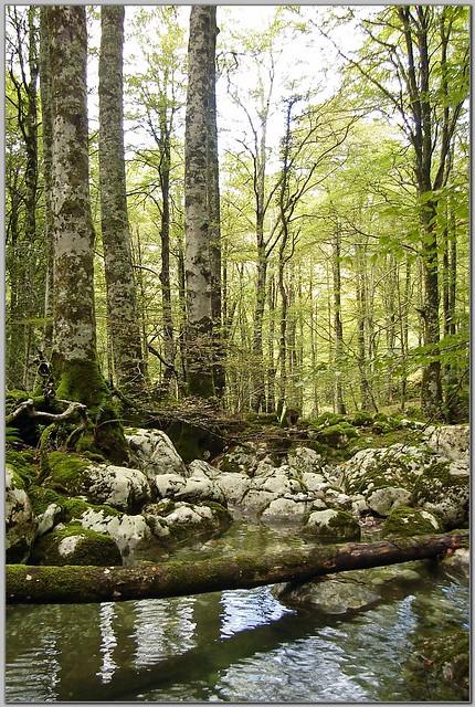 167.- Bosque del Monte Agüera, en el cauce del río Samedón.