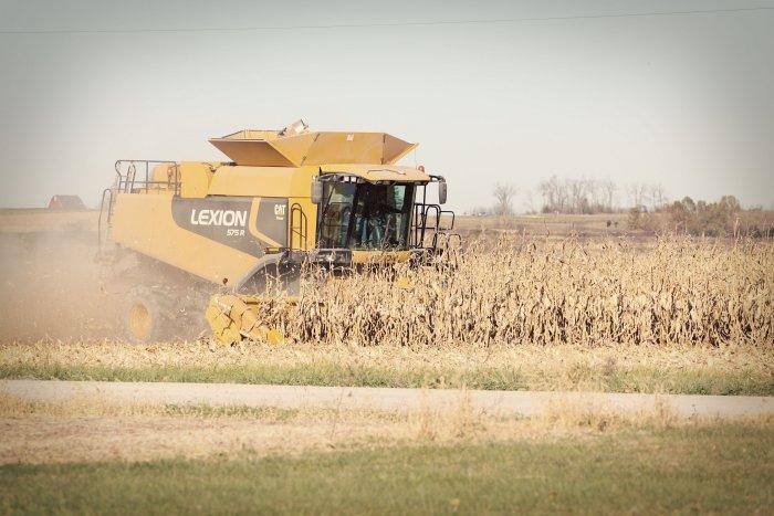 11-5-corn1