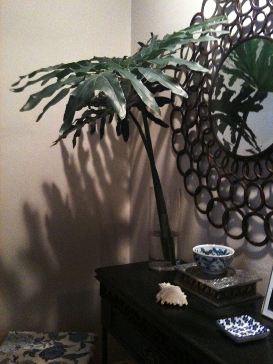 large leaves in the master bedroom on the night stand