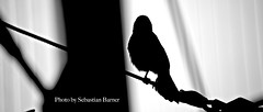 Silhouette D'un Oiseau (Sebastian B.B.) Tags: lighting old trip light shadow blackandwhite bw white black bird art up field lines birds animal animals silhouette metal composition dark geotagged photography grey zoo ol photo blackwhite nice nikon focus iron europe exposure raw day tour dof close natural image photos bokeh background tag small great feathers feather indoor right gone line tagged sharp depthoffield indoors winner favourites dreamy 500mm geo depth oiseau unaware filmic dun 235 naturallighting d700 paintalike