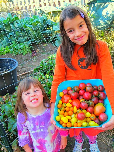 Our cute tomato harvesters