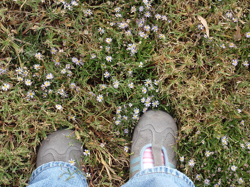 Me and the Teeny-Tiny Wildflowers