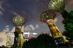 Gardens by the Bay , Supertree Grove (CHWVB) Tags: singapur night city marina bay singapore gardens supertrees tree bäume langzeitbelichtung long exposure sands hotel