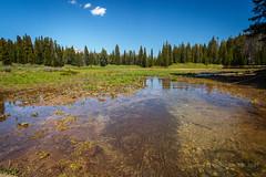 Walk to Ski Lake – pond (scepdoll) Tags: skilake philipscanyon wyoming jackson wildflowers hike arrowleafbalsamroot