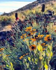 """Glassford Hill Wildflowers"" (Paul Ewing) Tags: wildflowers photoedit vinci vinciapp prescottvalley arizona flowers"
