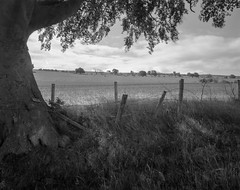 Tree, fence, field and sky (Jonathan Carr) Tags: black white monochrome landscape rural northeast toyo45a 4x5 5x4 largeformat