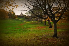 Greenwich Park (joiandrea) Tags: park uk greatbritain parque autumn trees verde green london fall grass leaves hojas árboles londres 2009 meridian tardor meridiano césped fulles greenwichmeridian otoo