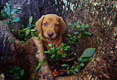 Adoption is better (AnnuskA  - AnnA Theodora) Tags: life plants dog pet puppy golden respect blueeyes roots adorable lovely awareness adoption treet tms tellmeastory 3000v120f bythewaythisphotolooksawesomeinalargeprint