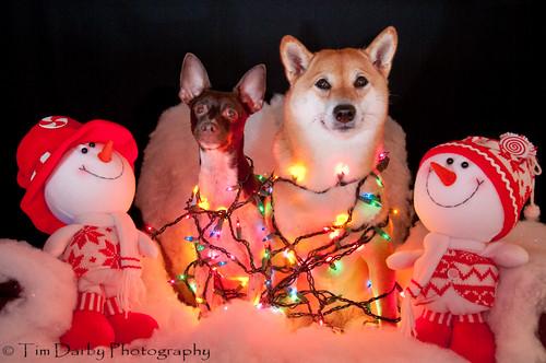 2009-12-13 - Christmas Pets-80