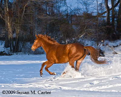 Fine art equine images, horse photograph, horses in snow