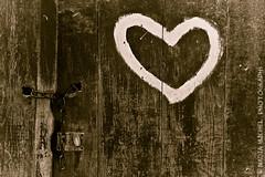 Parti rchauffer le Ple Nord... (Nadia || Magnolias Prod.) Tags: door wood brown white france texture love sepia canon eos nadia paint heart coeur peinture amour porte decrepit marron blanc magnolias bois 1850 imissyou withlove 450d canoneos450d nadiamichel magnoliasproductions canon1855mmefsf3556is mymistersunshine