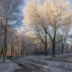 A Happy, Healthy and Peaceful 2010 (Cajaflez) Tags: park schnee winter snow holland frost hiver sneeuw nederland thenetherlands newyear nieuwjaar neige veenendaal vorst anawesomeshot natureselegantshots quarzoespecial saariysqualitypictures