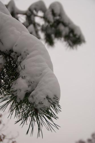 Neujahrscachen 2010 - Schneehaube