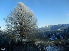 Le col de Ste-Marie-aux-Mines (~ Carole ~) Tags: montagne hiver neige col froid vosges stemarieauxmines