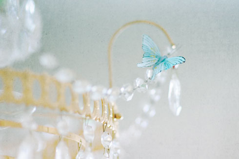 butterfly on our chandelier