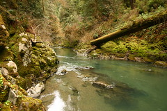 Ripples in the Redwoods (shutterbuff411) Tags: creek redwoods mossy
