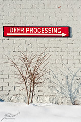 This Way To Process Deer