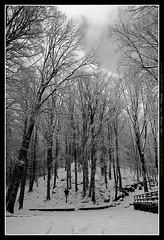 tabernacolo (papernikke) Tags: neve toscana paesaggio verna casentino santuario mistico fotoconneve