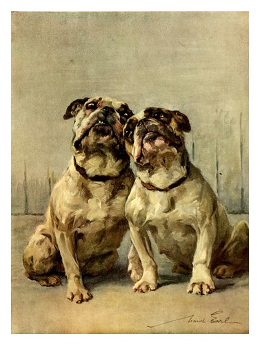 016-Bulldogs enanos-The power of the dog 1910- Maud Earl