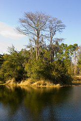 The Serenity of Nature (Nancy Vanderbilt Photography) Tags: blue trees sky green nature water overgrown bare branches ripples lush barren 2010 perfectlyimperfectphotography