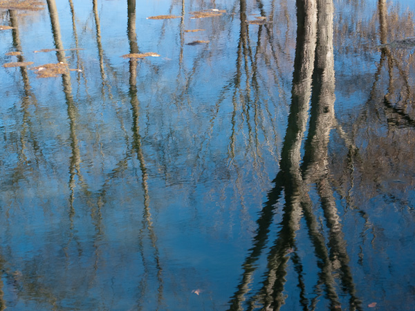 Reflection in Sugar River
