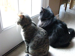 Brother and sister on squirrel patrol