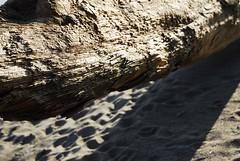 Driftwood Textures