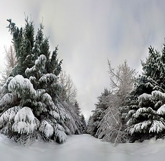 Winter grotto (Mel Stephens) Tags: uk winter panorama plants plant tree landscape geotagged scotland flora aberdeenshire very olympus panoramic best 99 gps favourite scape stitched plantlife 2010 ptgui
