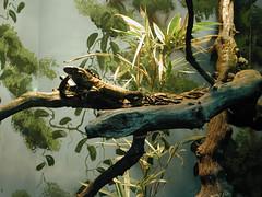 Zoo of Denver  DSCN0178_1