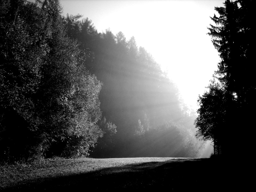 licht_schatten_natur