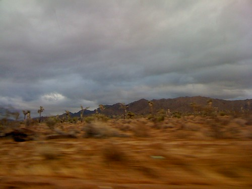 Joshua Tree in a Blur