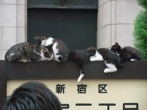 新宿三丁目の伊勢丹前で寝てた猫