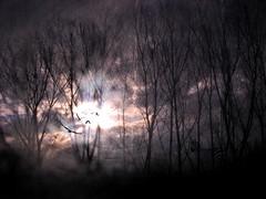 I was dreaming of the past...* (C.Canzos) Tags: trees birds arboles view violet paisaje textures pajaros zebra nightmare pesadilla texturas violeta destello cebra resplandor