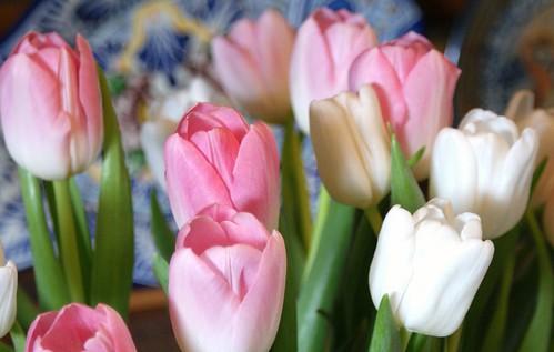 monday tulips