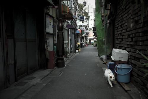 JC0131.102 東京都新宿区歌舞伎町 sn35#
