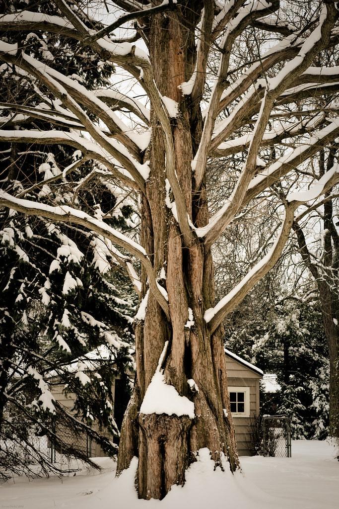 #55 Tree