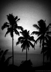 afternoon coconuts (roliverjvergara) Tags: blackandwhite canon photography alfonso afternoon philippines grain coconuts aftersunset 200mm alfonsocavite dpssilhouettes roliverjvergara